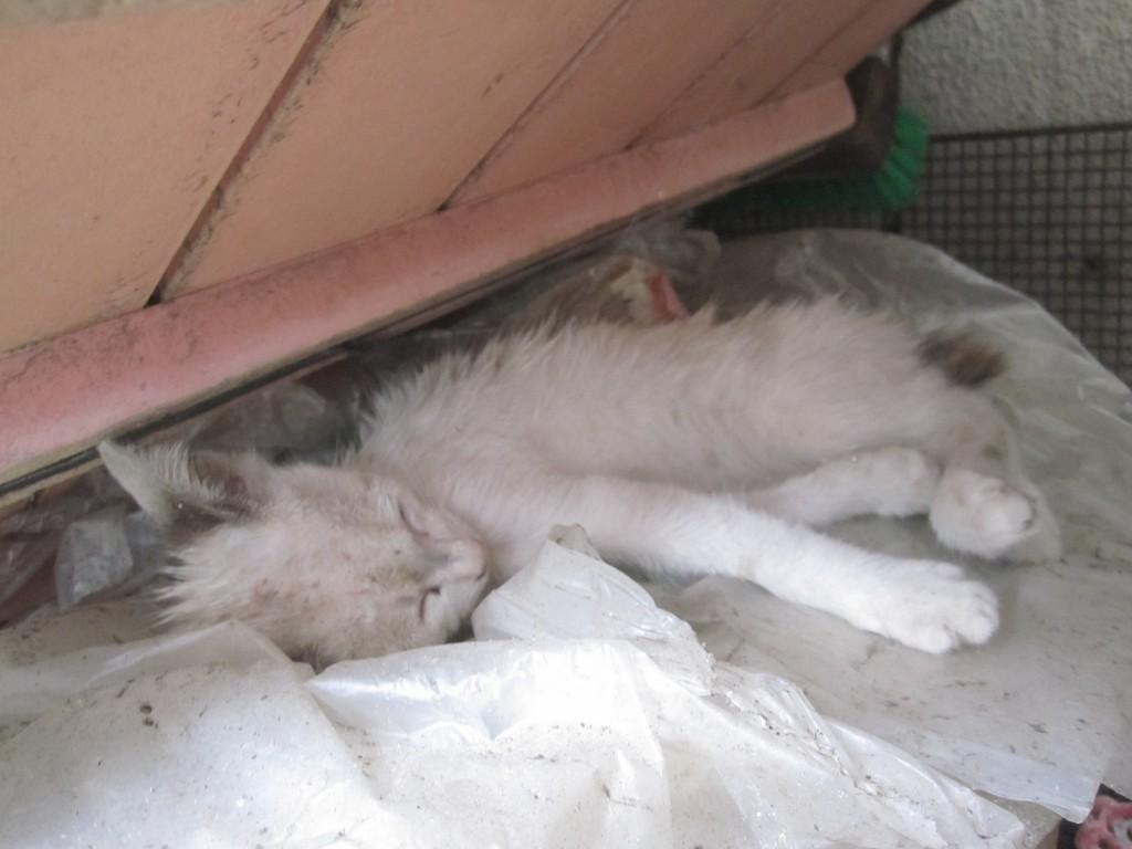 スヤスヤと眠る野良猫の子猫