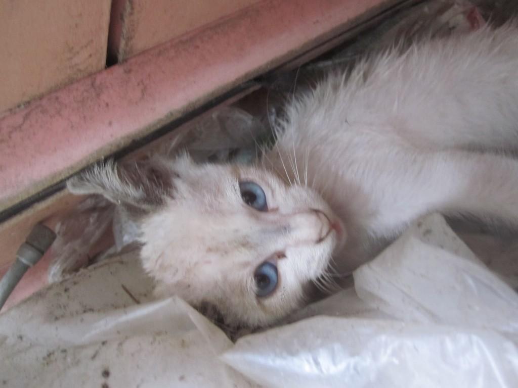 目を覚ました野良猫の子猫