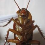 昆虫食は宇宙食!人類が宇宙進出を果たす時、食料は自然と虫になり現地(火星とか)での養殖も常識になる未来がやって来る。