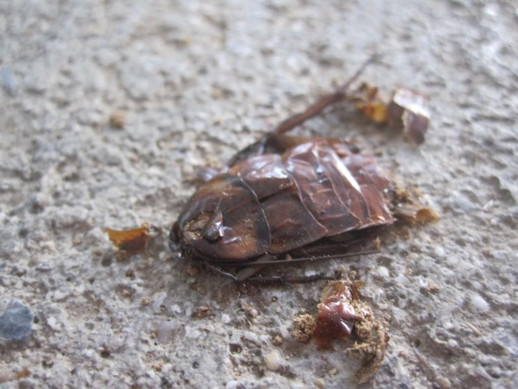 人間に踏み潰されて死んだゴキブリの死骸