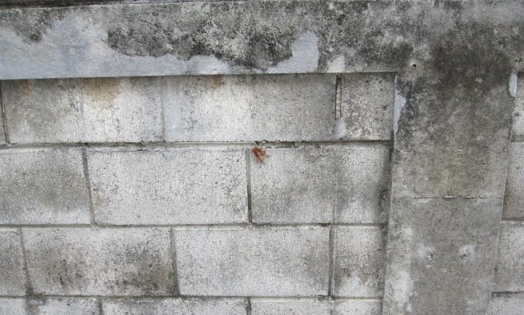 コンクリートの壁・塀に虫がいる様子