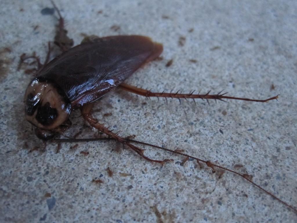 蟻によって脚だけが取り外される様子