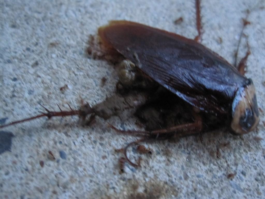害虫ゴキブリが自然サイクルに還って行く過程