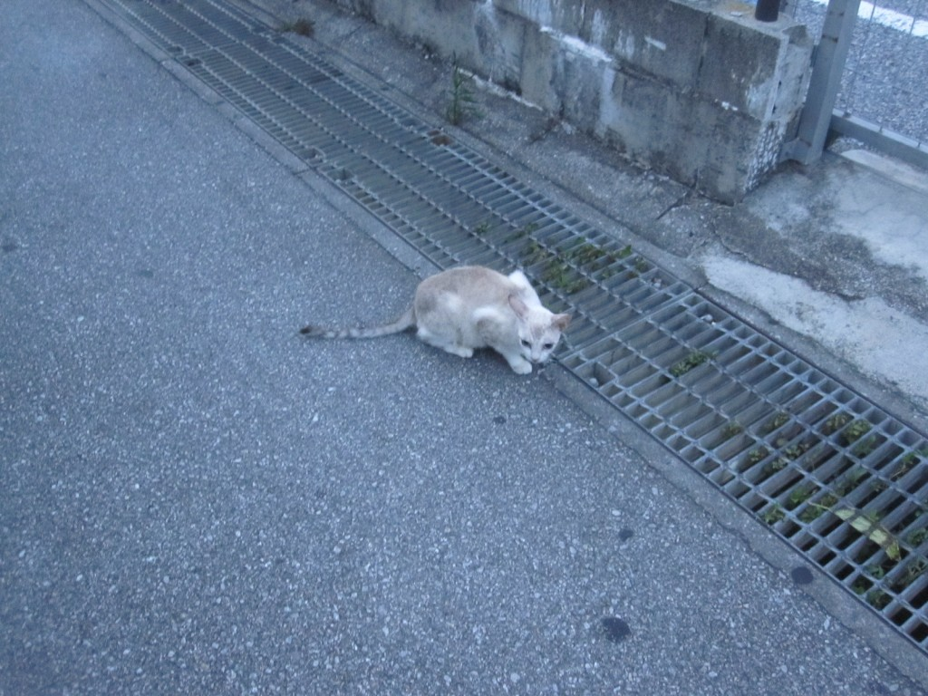 人間を警戒する大人の野良猫
