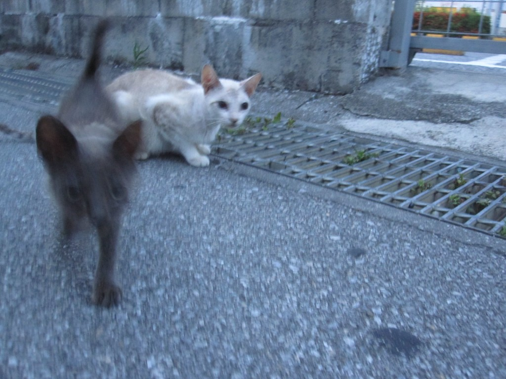 親猫に甘えた声で鳴く子猫