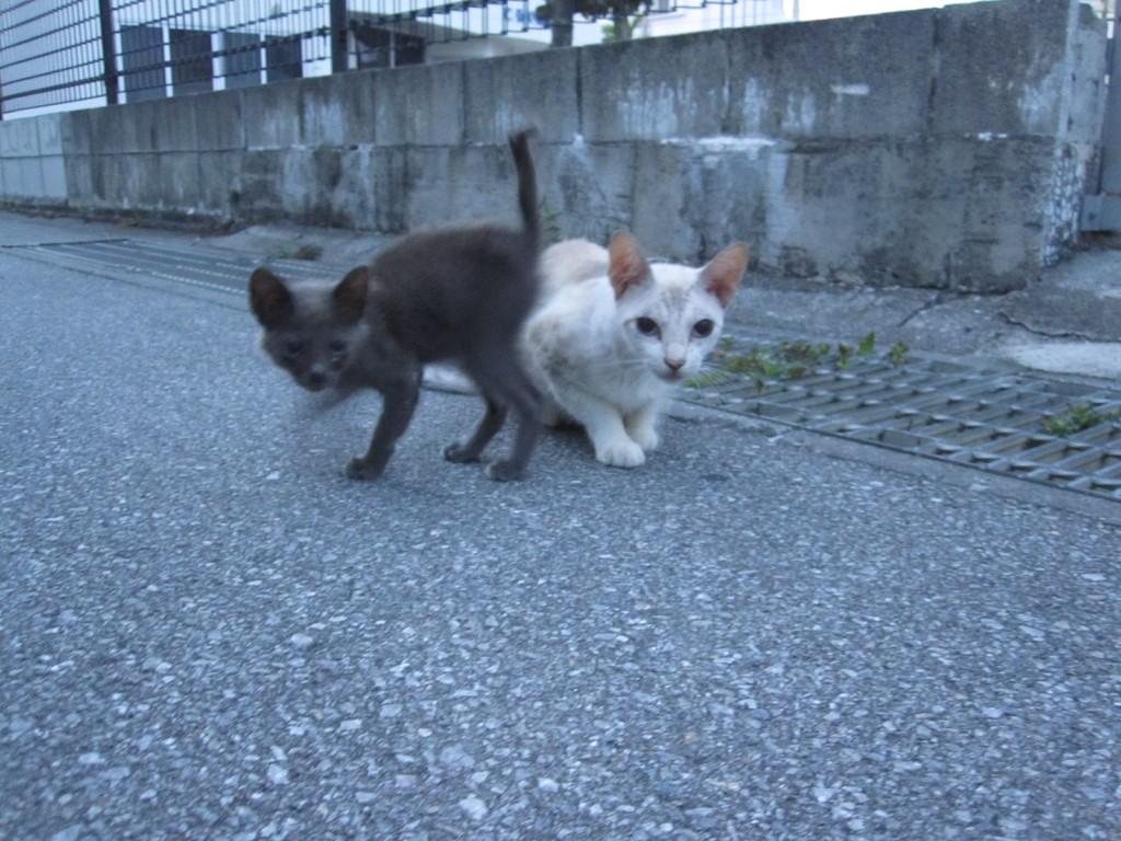 じゃれ合う野良猫の親子