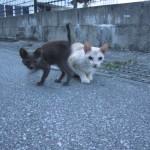 早朝のジョギング中に出会った野良猫の親子 ※親猫に威嚇された(笑)