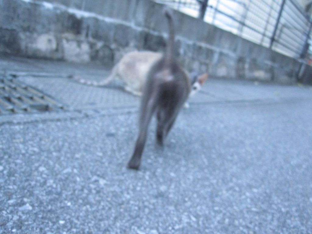 立ち去る野良猫の後ろ姿・お尻