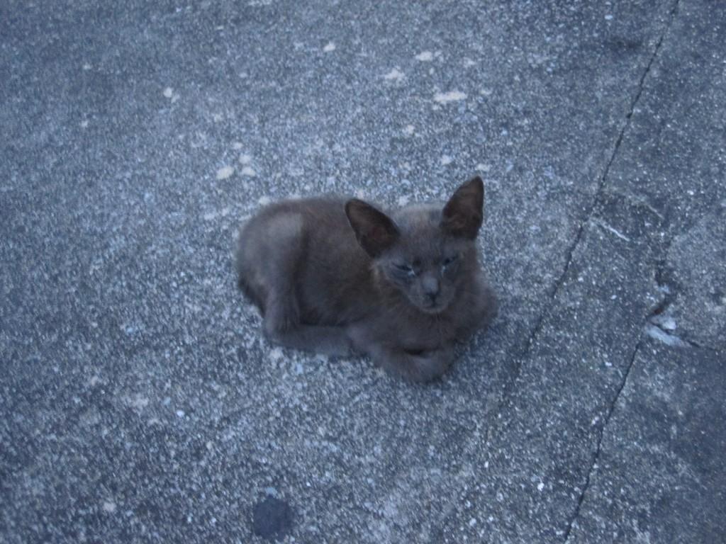 道路の脇で睡眠中の子どもの野良猫