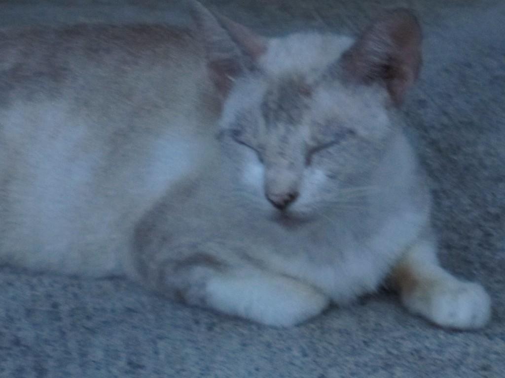 目を瞑りスヤスヤと眠りだす野良猫