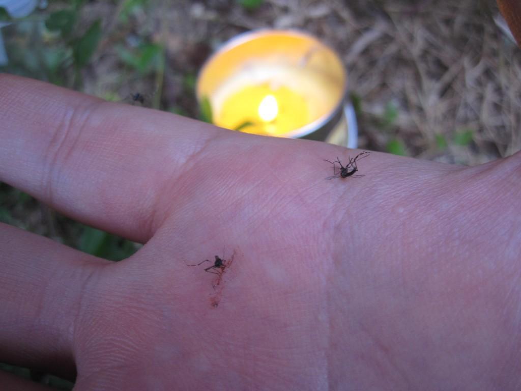 平手打ちで蚊を殺した瞬間