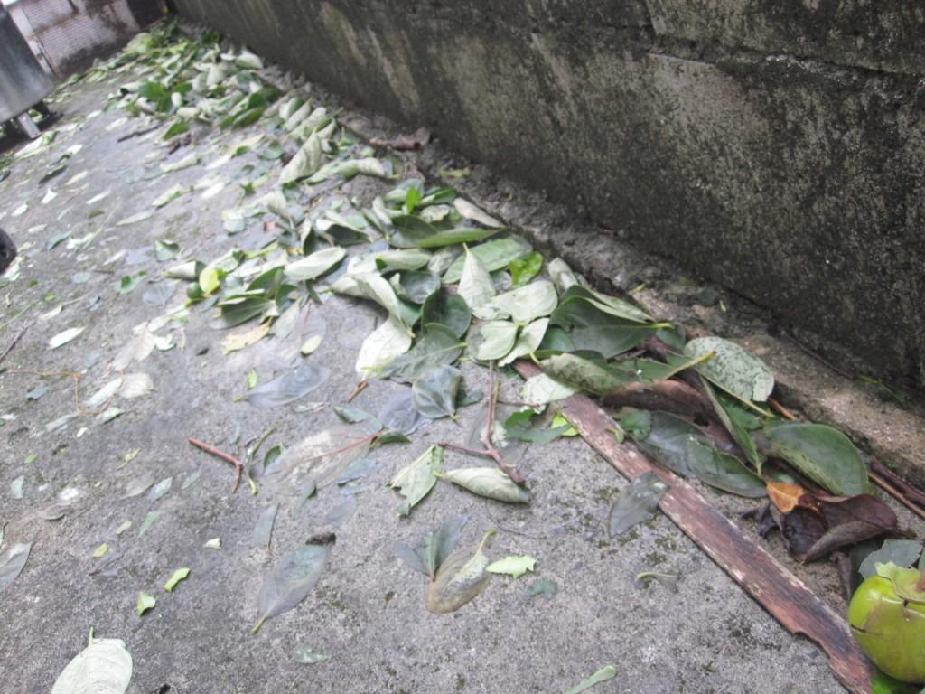 落ち葉が散乱して散らかった様子