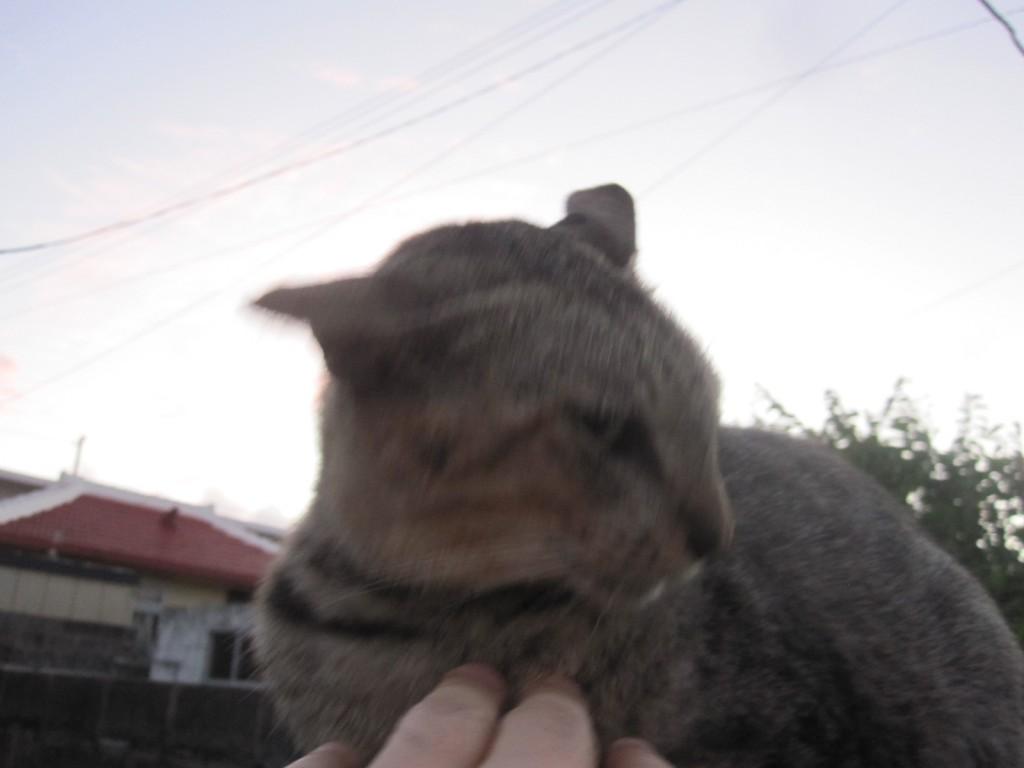 撫でられて御機嫌な野良猫