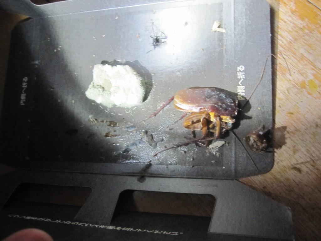 設置から1ヶ月半が経過して1匹のゴキブリを捕獲