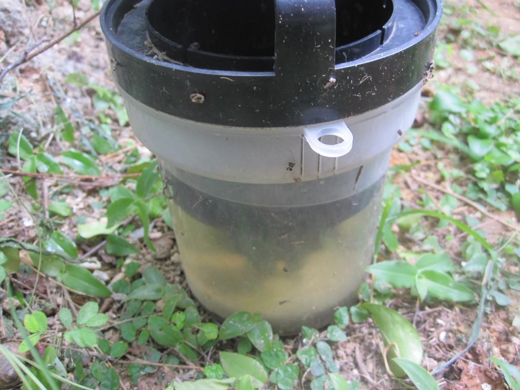 密閉された空間内の雨水にボウフラが発生した「蚊とりん」