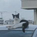 野良猫の糞尿被害、餌与え人と猫のどっちが悪い!?