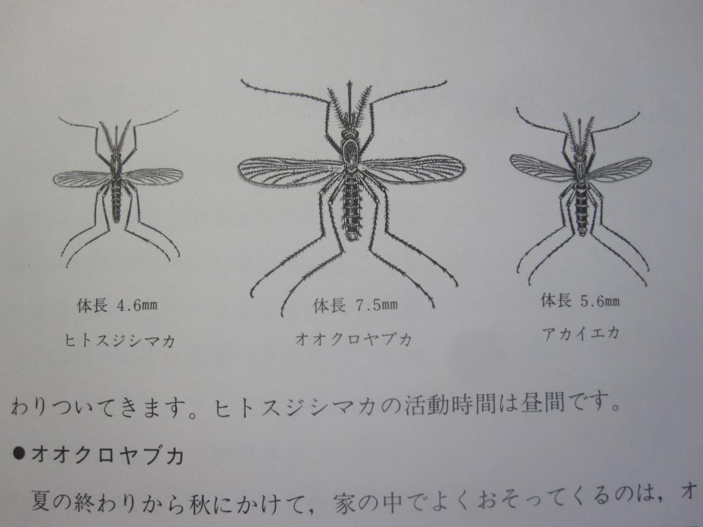 蚊の種類別のイラスト比較