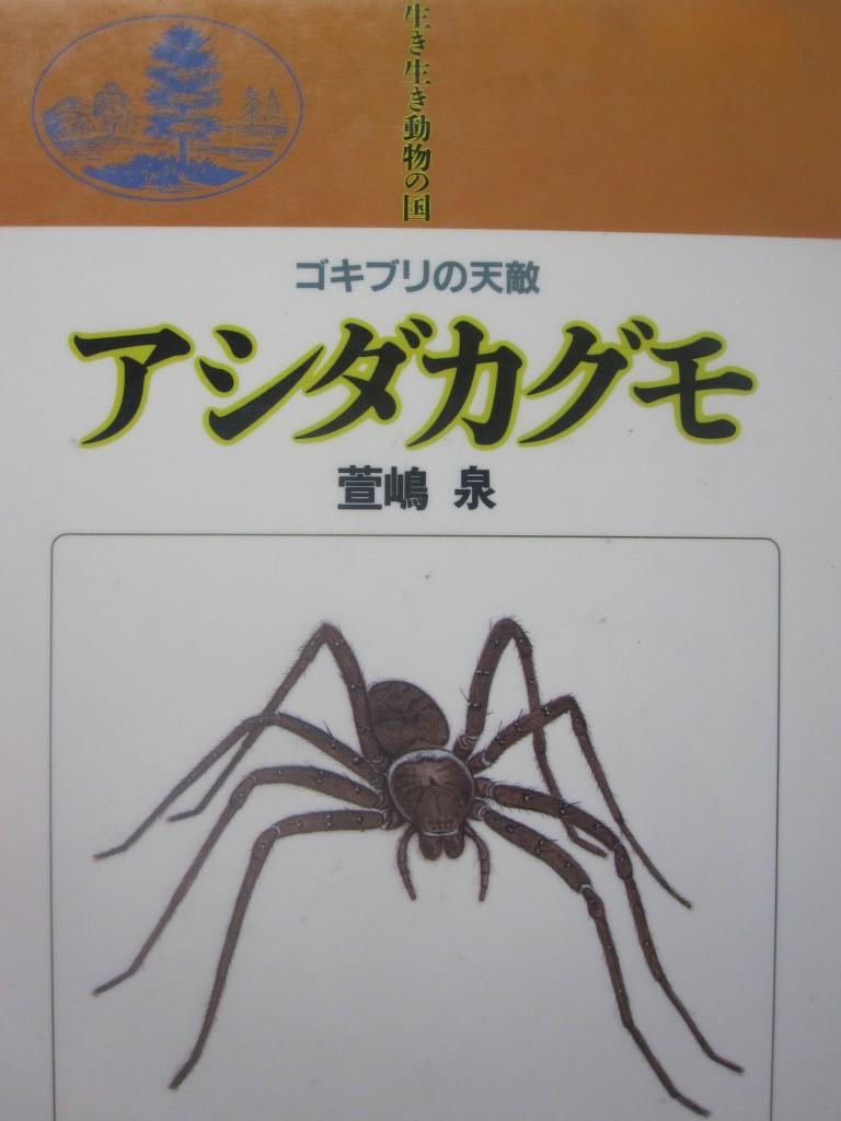 生き生き動物の国:ゴキブリの天敵 アシダカグモ