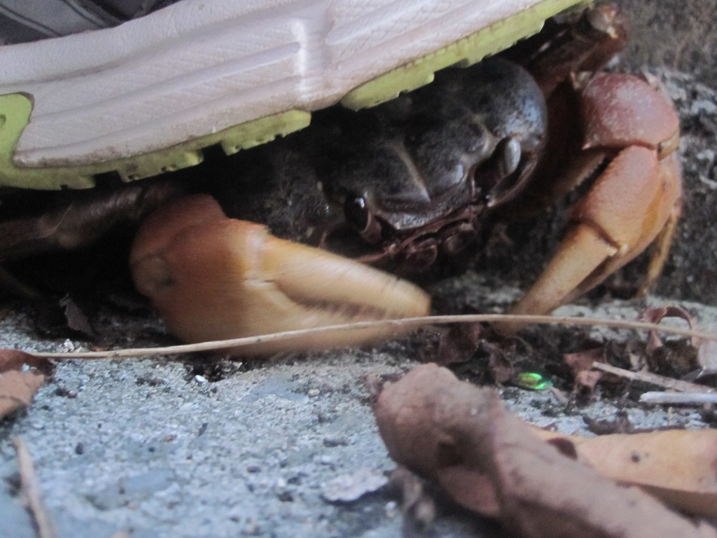 隙間に隠れて卵を守る防錆本能を垣間見せる
