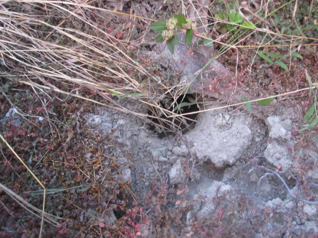 地面に掘られた巣穴らしき穴
