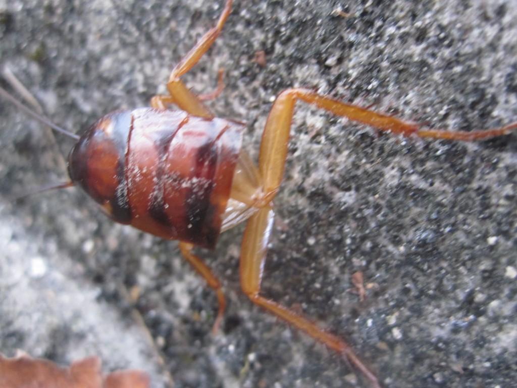 身軽に壁を伝う下半身露出のゴキブリ