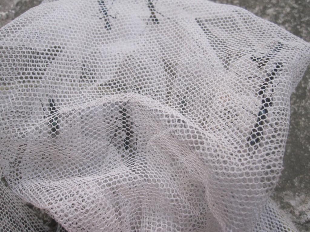虫取り網でトックリバチの大群を一網打尽に捕まえた様子
