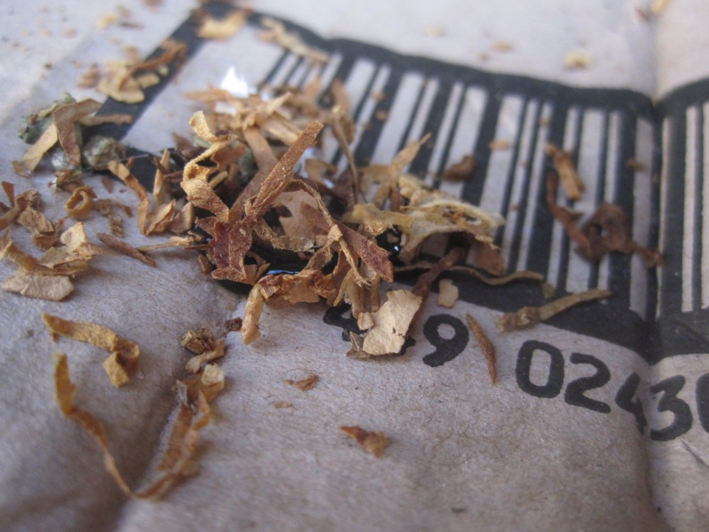 タバコの中身を浴びたニューギニアヤリガタリクウズムシ