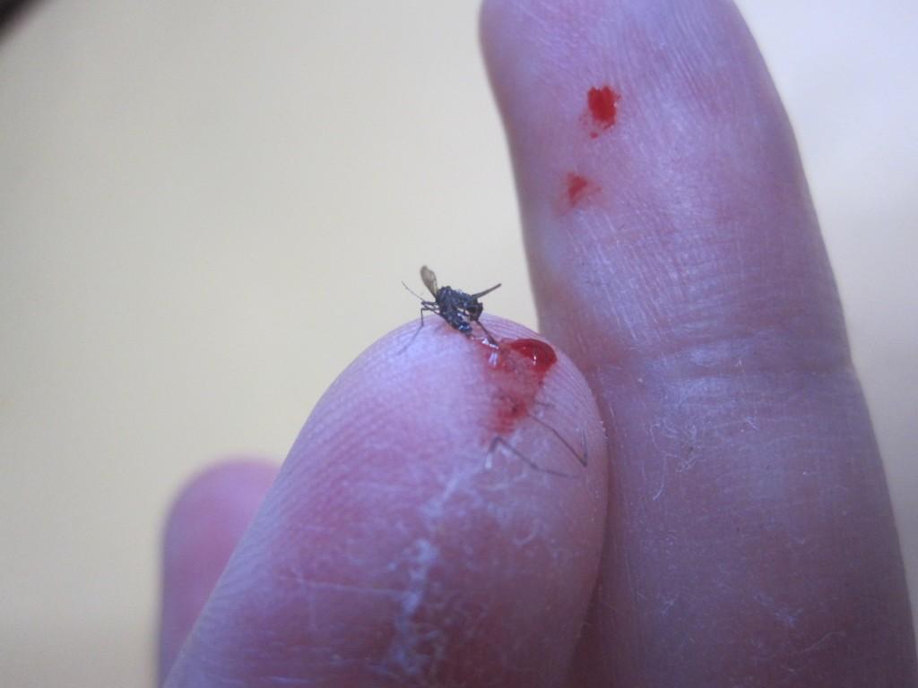 捕殺した蚊からこぼれ溢れた血液
