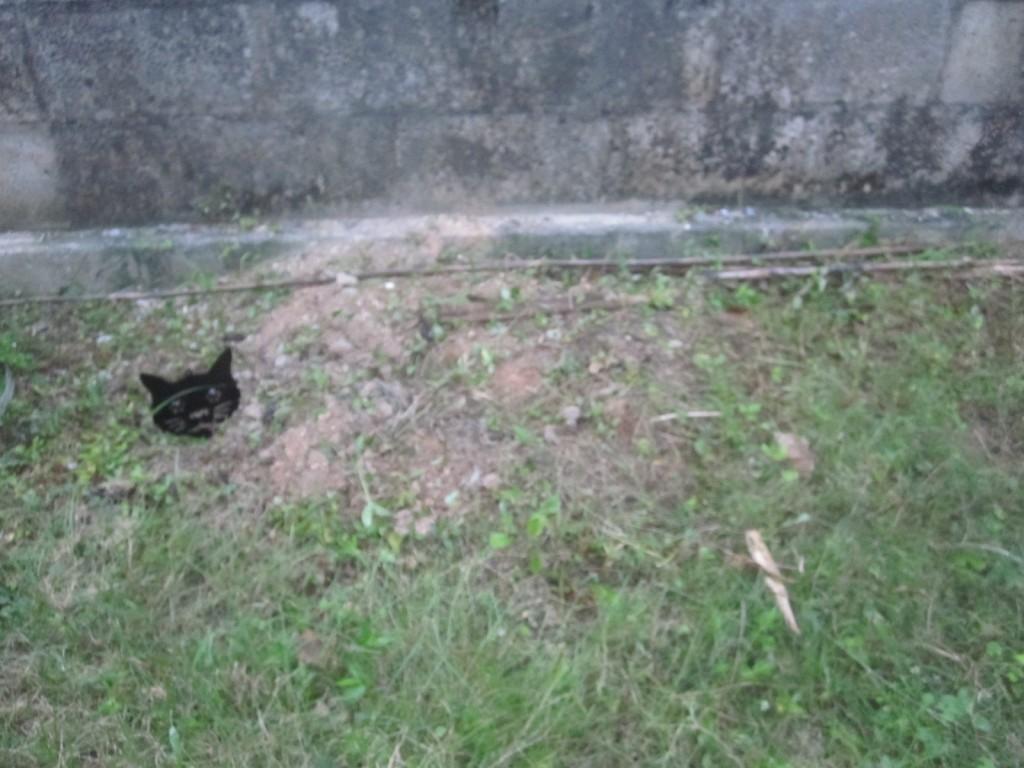 遠くから見ると猫を埋めたような不気味な状況が生まれる