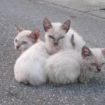 家族で寄り添い日向ぼっこする野良猫に癒される早朝