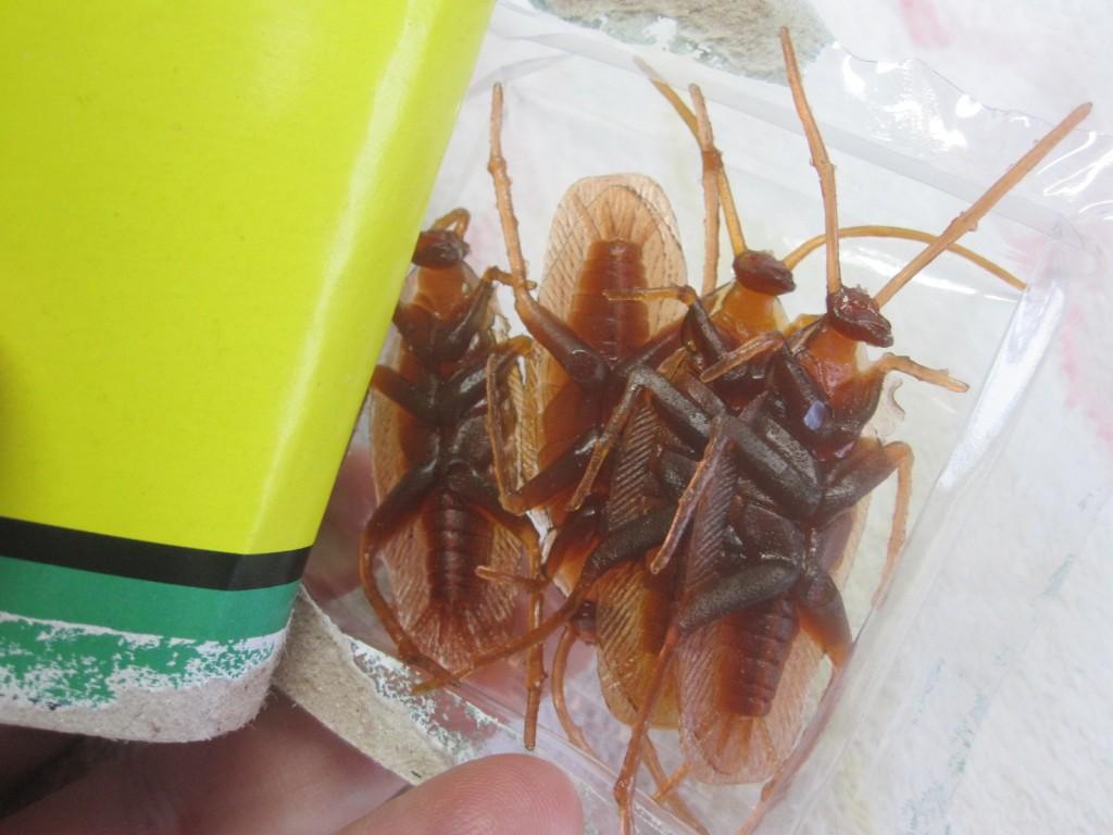 薄茶色の4匹のゴキブリが登場!