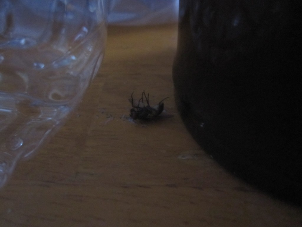 テーブル上の物の間に逃げ隠れたハエ