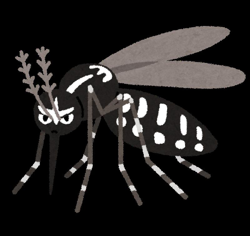 感染症デング熱を媒介するヒトスジシマカ(ヤブ蚊)