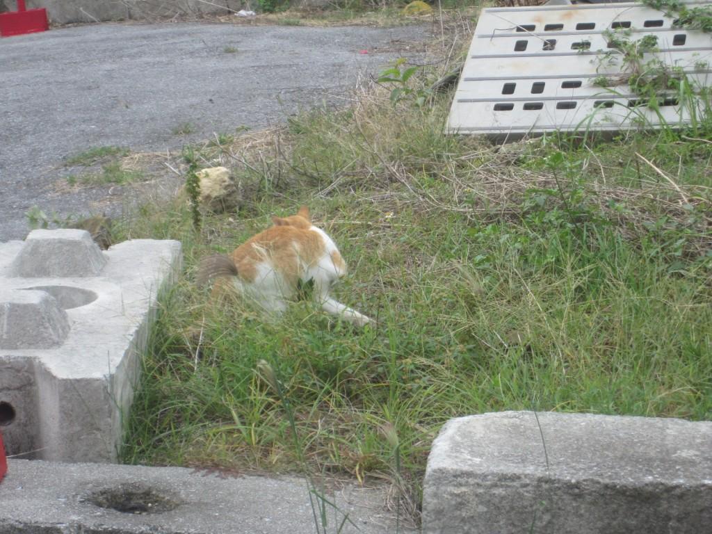 原っぱで寛いでいた首輪のない野良猫
