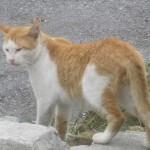 野良猫が家の塀を歩くのが不愉快だから空気銃・エアガンで撃ち追い払え!って虐待?犯罪?動物愛護法?