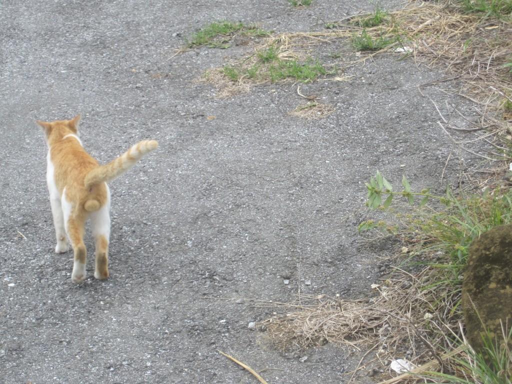 シッポを立てて背伸びをしてあくびする猫