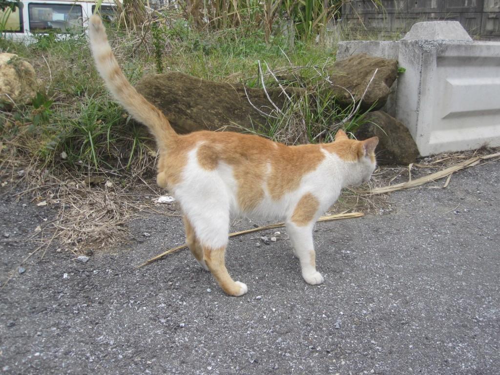シッポを立てて背伸びする野良猫