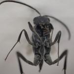 昆虫・害虫を虫メガネや顕微鏡で見たような超接写モードで写真撮影できるOLYMPUS STYLUS TG-4が楽しすぎる!