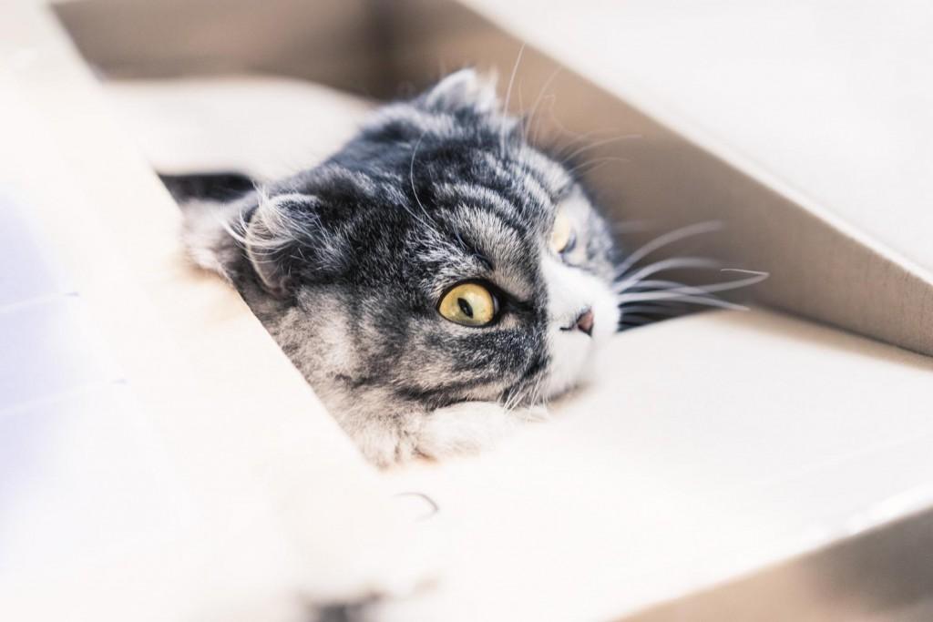 気配を感じて背後を振り向くダンボール猫