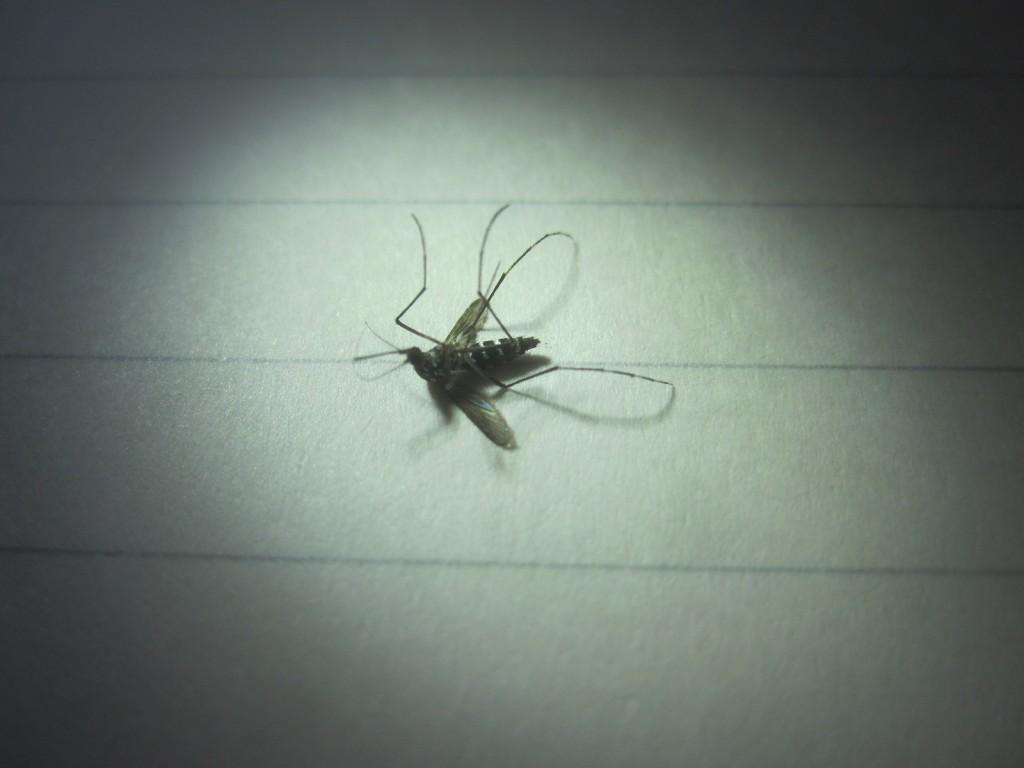 演劇の舞台で照明を浴びるような厳かな雰囲気の蚊