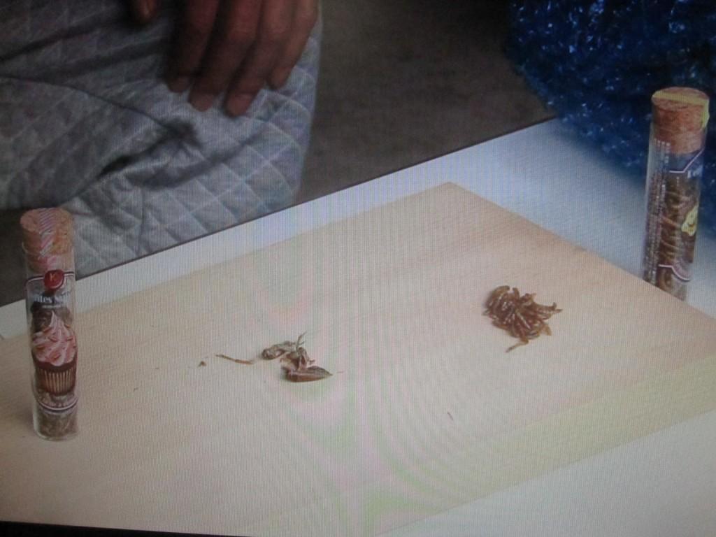 まな板の上に置かれた食用の虫ミールワームとコオロギ