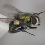 世界一の万能殺虫アイテム「ハエたたき」は蝿以外の害虫ゴキブリや蚊もを叩いて駆除する道具だ!
