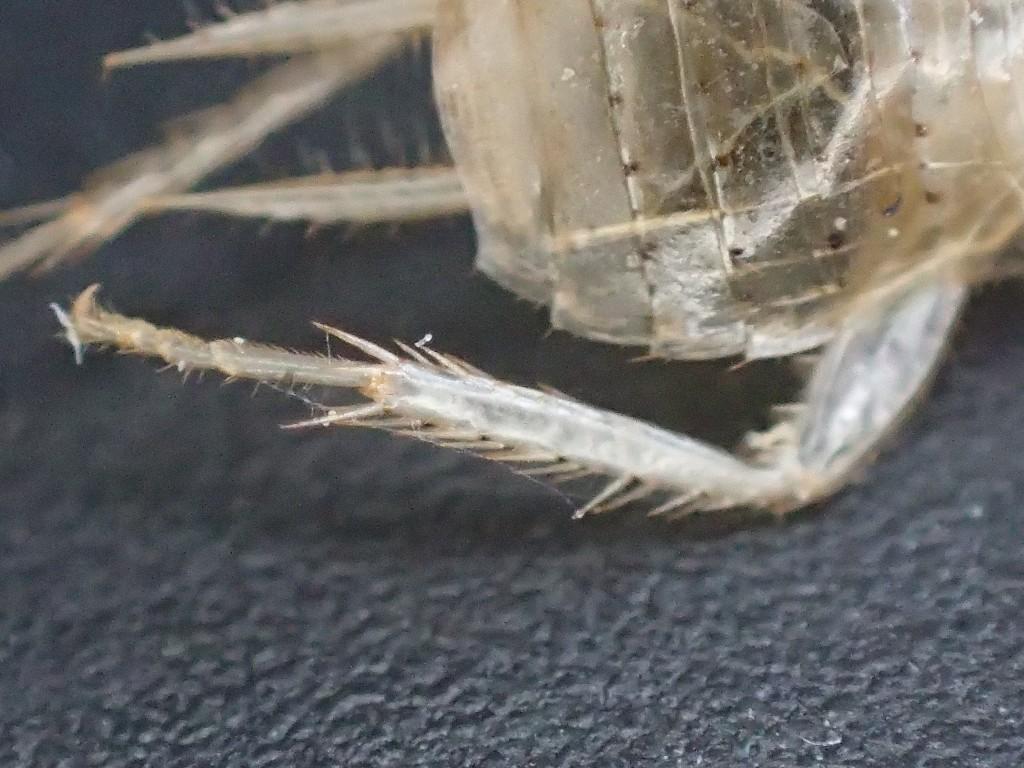 ゴキブリが脱皮して残した殻の超ズーム顕微鏡写真