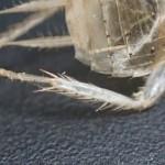 """最強のゴキブリ対策は掃除!夏が訪れる前に見つけたいゴキブリ脱皮の痕跡""""殻・皮""""があれば予防策を講じよう。"""