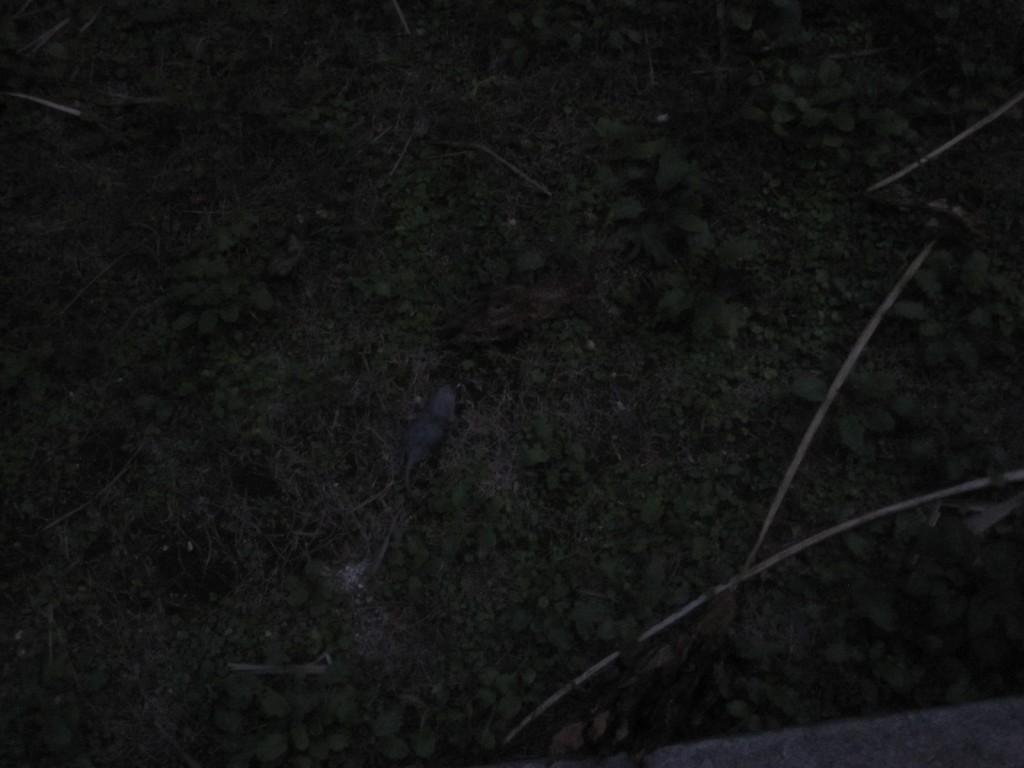 日が沈んだ夜、ガサゴソと物音が聞こえた