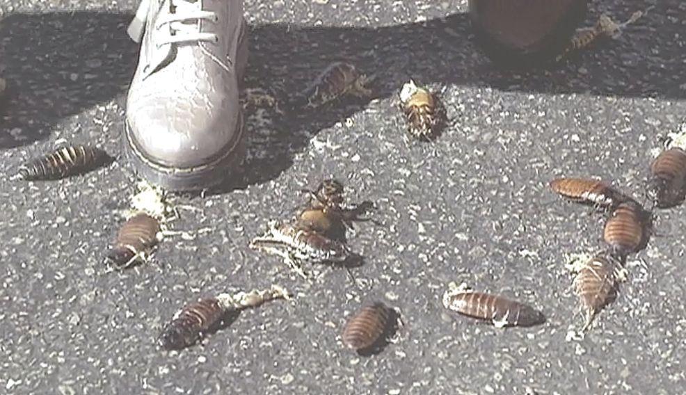 子どもたちの足元には小さな虫が踏み潰され死んでいた