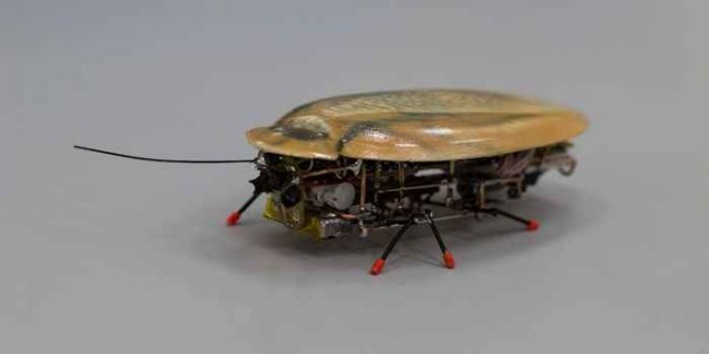 ロシアの大学が開発した遭難者の救助用ゴキブリ型ロボット?