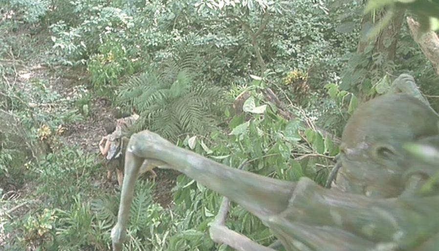 樹上から調査隊をジッと見つめる怪しげな脚と物体が・・・