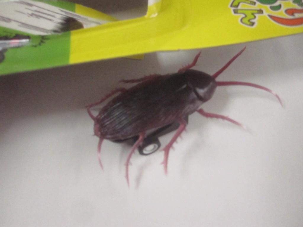 遂に始動した害虫を模したゴキブリ・チョロQ