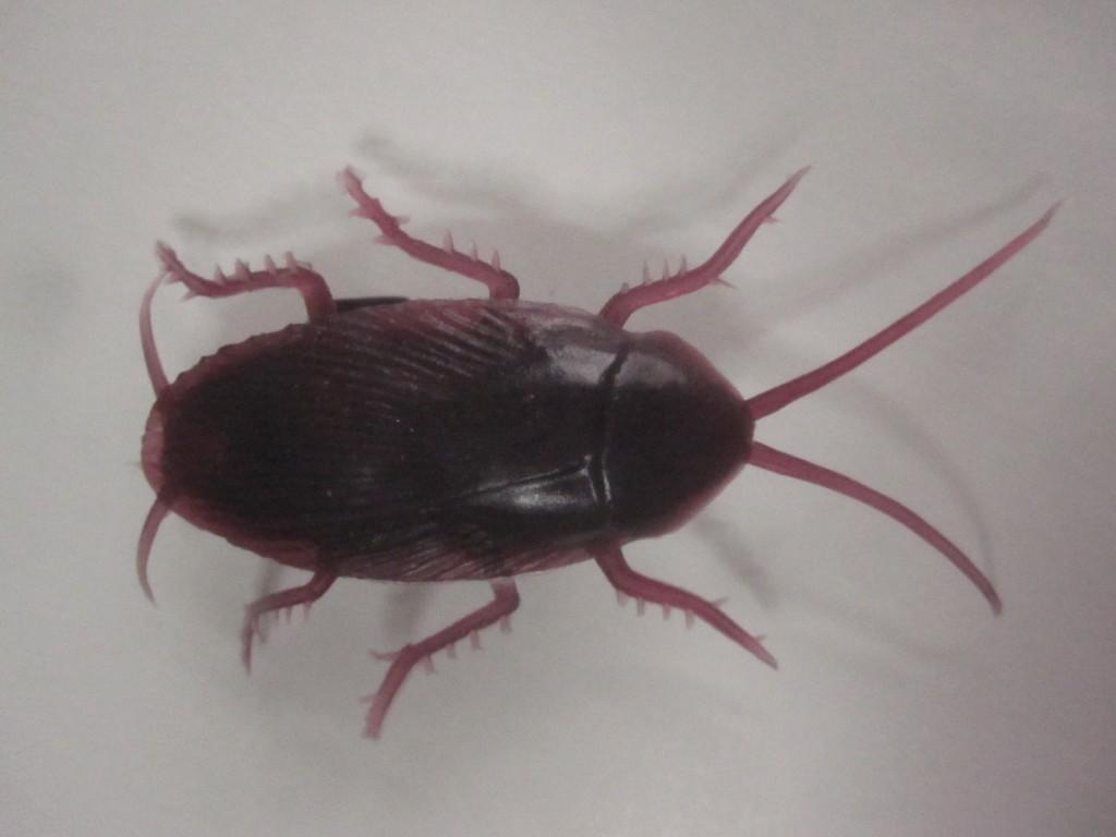 ほいほいダッシュ ゴキブリ・チョロQの真上から撮影した写真